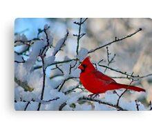 Cardinal After the Snowstorm Canvas Print