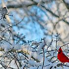 Winter Birds by karineverhart