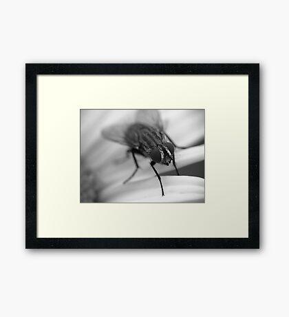 Fly 1 B&W Framed Print