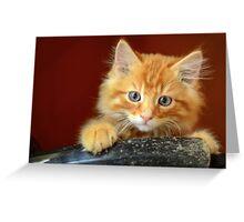 Ginger Kitten Greeting Card