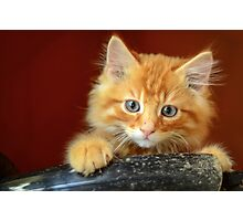 Ginger Kitten Photographic Print