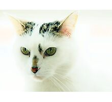 All White Mr Stampy? Photographic Print