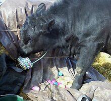 Easter Bovine Preparations by JobieMom
