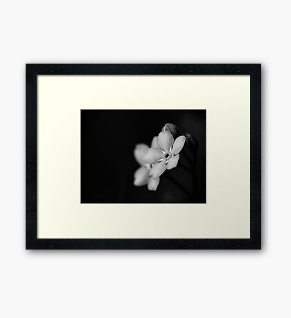 Forget-Me-Nots 10 B&W Framed Print