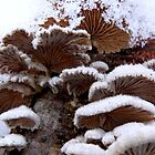 Snowshrooms by PierPhotography