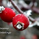 Christmas Berries by LooseImages
