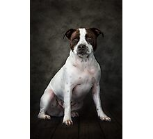 Gizmo Photographic Print