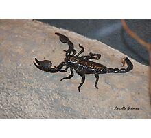 Black Scorpion Photographic Print