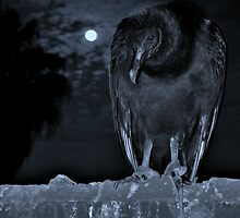 Moonlight Vulture by blackpixi