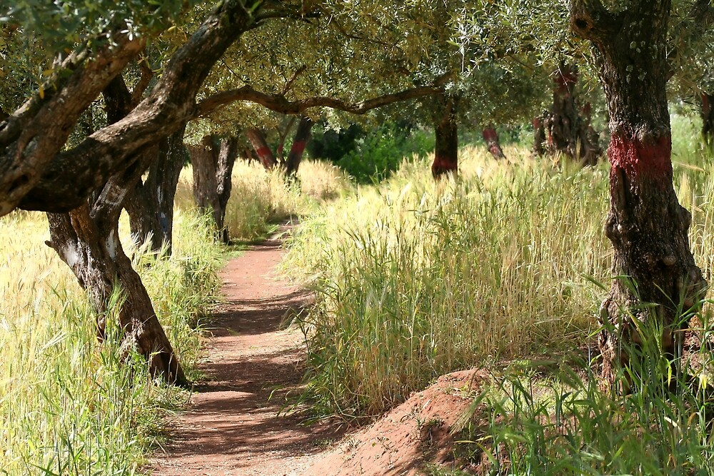Follow the path  by areyarey