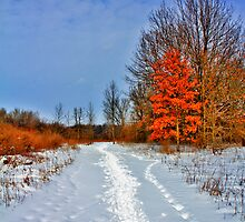 Winter Leaves by EBArt