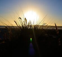 Grassy Sunset by Carrie Bonham