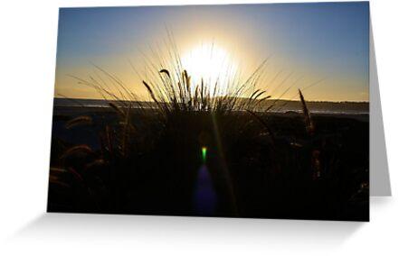 Grassy Sunset by Carrie Bonham