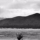 Cactus by Carrie Bonham