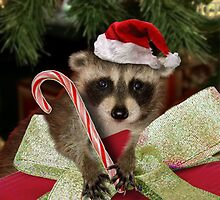 Christmas Raccoon by jkartlife