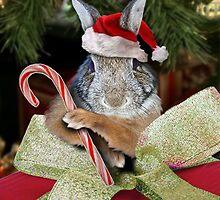Christmas Bunny Rabbit by jkartlife