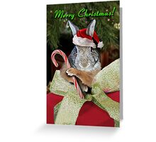 Christmas Bunny Rabbit Greeting Card