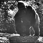 Mighty Joe young by Joe Bledsoe