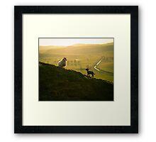 Scottish Sheep and Lamb Framed Print