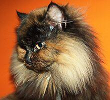 Cat by Marina Kropec
