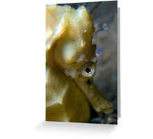 Seahorse hiding, Cerberus, Melbourne Greeting Card