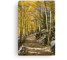 Aspen Tree Path, Rocky Mountain National Park, Colorado Canvas Print