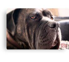 Sad Dog Canvas Print