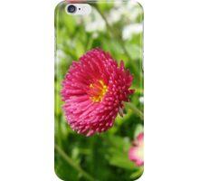English Daisies 1 iPhone Case/Skin