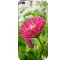 English Daisies 3 iPhone Case/Skin