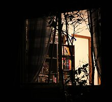 The Library Window by aussiebushstick