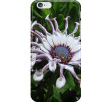 African Daisy 1 iPhone Case/Skin