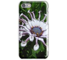 African Daisy 1 iPhone Case/Skin