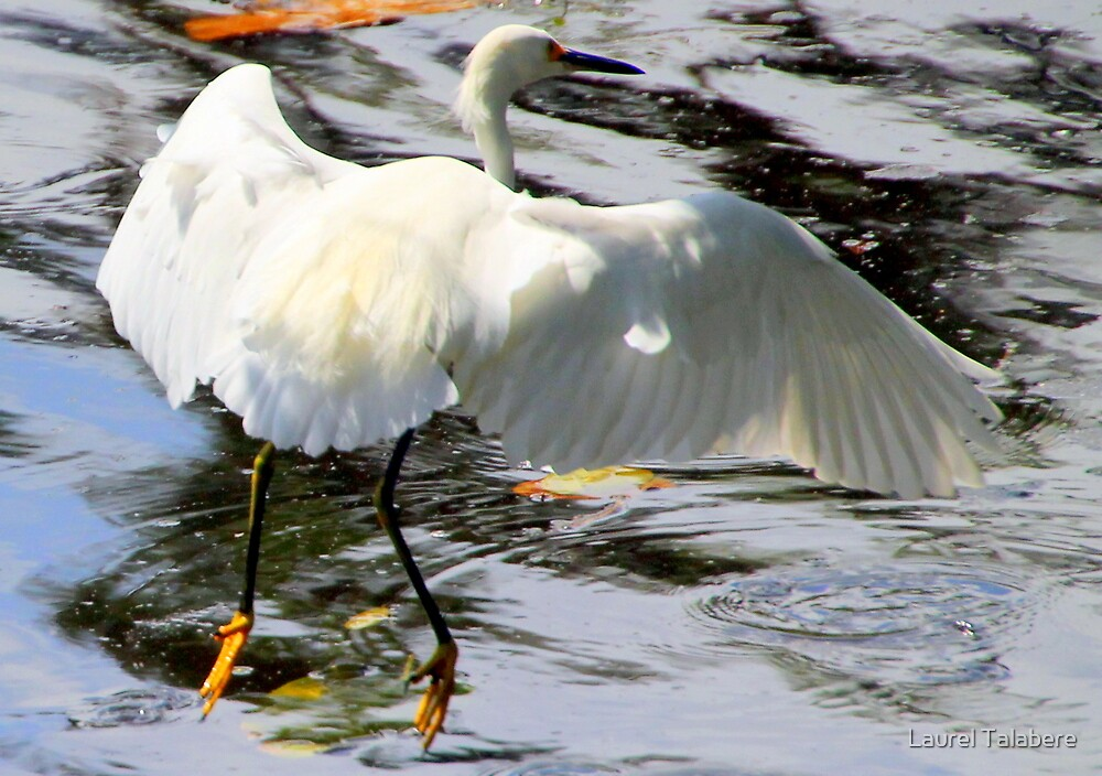Great Egret Landing Gear By Laurel Talabere Redbubble