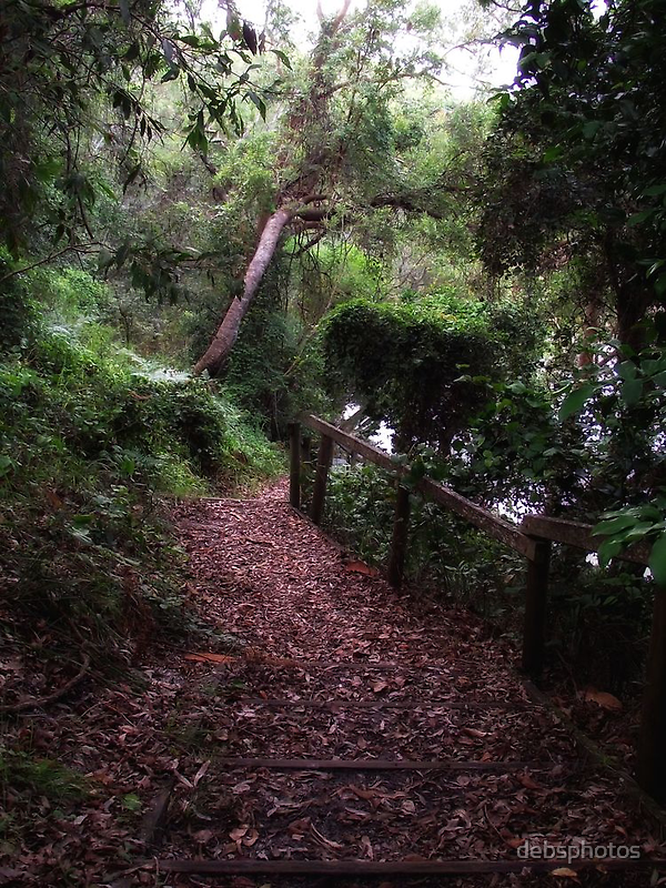 Pathway to the Creek... by debsphotos