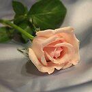 Rose on Silk by Bob Hardy