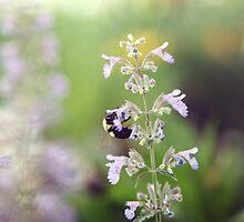 Bee on Flower by Megan Schatzman