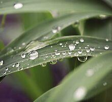 Grass and Raindrops by Megan Schatzman