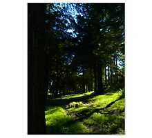 Take a wander through nature Photographic Print