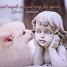 Dogs and angels . . . by Bonnie T.  Barry