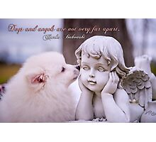 Dogs and angels . . . Photographic Print