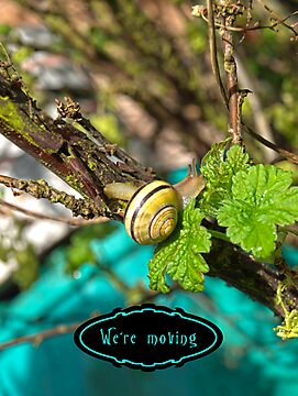 Yellow Grove Snail by vivendulies