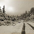 Winter In Sepia by Chet  King