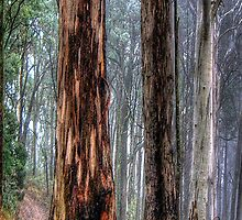A Road Less Travelled - Victorian Alps (Vertical Crop) # 3  - The HDR Experience by Philip Johnson