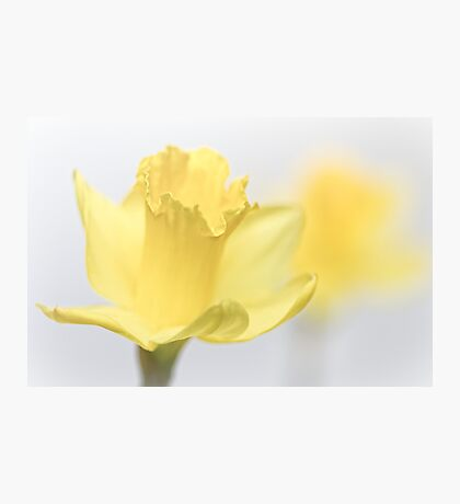 Bashful blooming... Photographic Print