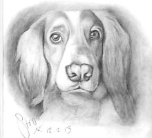 Cocker Spaniel by stoophilpott