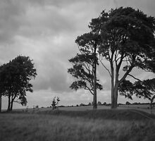 Windswept Trees by Stevie B
