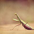 Praying Mantis - Queen of the Garden by Renee Dawson