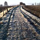 Frosted Track by Jacqueline Longhurst
