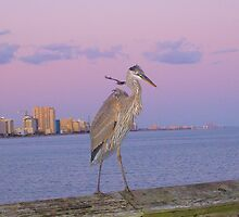 Great Blue Heron by Dawne Dunton