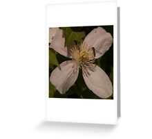 Mmmmm - Nectar Greeting Card